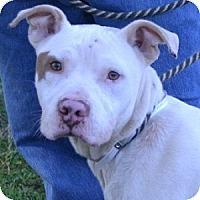 Adopt A Pet :: Rudy - Athens, GA