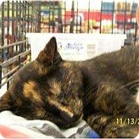 Adopt A Pet :: Lindsey (& Laurel) - Riverside, RI