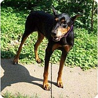 Adopt A Pet :: Silvia--adopted!! - New Richmond, OH
