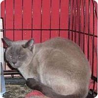 Adopt A Pet :: Kitti - Bedford, MA