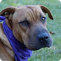 Adopt A Pet :: Russell - Mocksville, NC