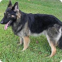 Adopt A Pet :: Montego - Houston, TX