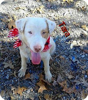 Terrier (Unknown Type, Medium) Mix Dog for adoption in Princeton, Kentucky - Tara