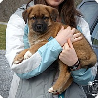 Adopt A Pet :: Fluffy Pup--RESCUED! - Marlinton, WV