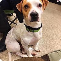 Adopt A Pet :: Alvin - Yuba City, CA