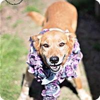Adopt A Pet :: Flame - Seattle, WA