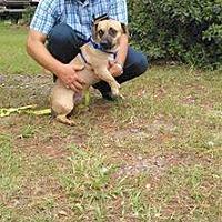 Adopt A Pet :: Duke - Marianna, FL