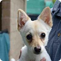 Adopt A Pet :: CRYSTAL - Goleta, CA