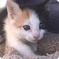 Adopt A Pet :: Alli - Furlong, PA