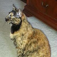 Adopt A Pet :: zz - Jill (courtesy listing) - West Palm Beach, FL