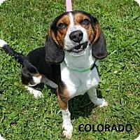 Adopt A Pet :: Colorado - Knoxville, IA