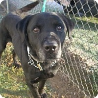 Adopt A Pet :: # 3 STRAY Avail. 12/3 - Carrollton, OH