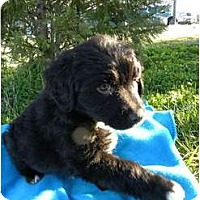 Adopt A Pet :: Thunder - Windham, NH