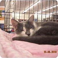 Adopt A Pet :: Jumping Jack Flash - Riverside, RI