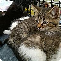 Adopt A Pet :: Abe - Sterling Hgts, MI