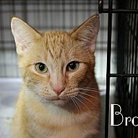 Adopt A Pet :: Brodie - Wichita Falls, TX