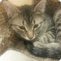 Adopt A Pet :: Charles - West Dundee, IL