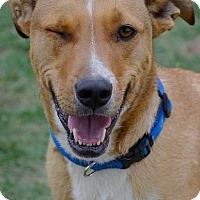 Adopt A Pet :: Banner - Midland, TX