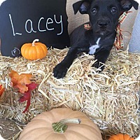 Adopt A Pet :: Lacey - Tracy, CA