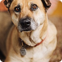 Adopt A Pet :: Nekari - Portland, OR
