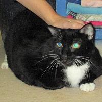 Adopt A Pet :: Anton - Reeds Spring, MO