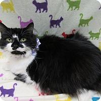 Adopt A Pet :: PRETTY GIRL - Lexington, NC