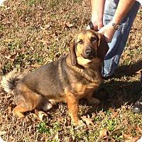 Adopt A Pet :: Bigby meet me 3/24 - Manchester, CT