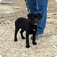 Adopt A Pet :: Blackie - Sagaponack, NY