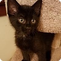 Adopt A Pet :: Ninja & Princess - Berkeley Hts, NJ