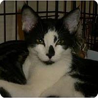 Adopt A Pet :: Oliver - lake elsinore, CA