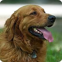 Adopt A Pet :: HUNTER - Providence, RI