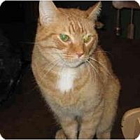 Adopt A Pet :: Wally - North Boston, NY