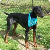Adopt A Pet :: Degen--adopted!! - New Richmond, OH