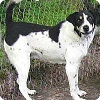 Treeing Walker Coonhound Mix Dog for adoption in Tahlequah, Oklahoma - Skip