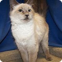 Adopt A Pet :: Elle - Colorado Springs, CO