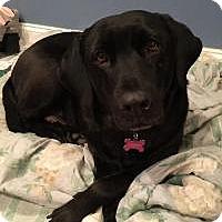 Adopt A Pet :: Blackie - Marlton, NJ