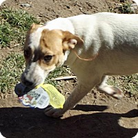Adopt A Pet :: **TAFFY - Peralta, NM