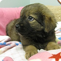Adopt A Pet :: CupCake - Groton, MA