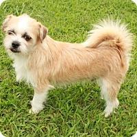 Adopt A Pet :: Wheaton - Salem, NH