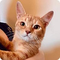 Adopt A Pet :: Loren - Mansfield, TX
