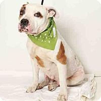 Adopt A Pet :: Daisy - Beverly Hills, CA