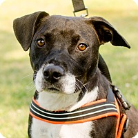 Adopt A Pet :: Mary - Greenwood, SC