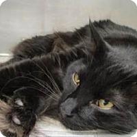 Adopt A Pet :: Beauregard - West Palm Beach, FL