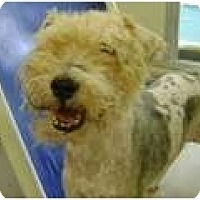 Adopt A Pet :: Fred - Longmont, CO