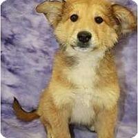Adopt A Pet :: Daffodil - Broomfield, CO