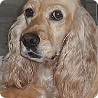 Adopt A Pet :: Fran - Sugarland, TX