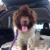 Adopt A Pet :: Nana - New Boston, NH