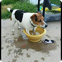 Adopt A Pet :: Roscoe - Somers, CT