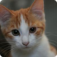 Adopt A Pet :: Malibu - Canoga Park, CA