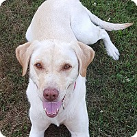 Adopt A Pet :: Ripley  COURTESY POST ONLY - Chesterfield, MI